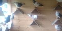 Grundstück für Taubenhaus gesucht