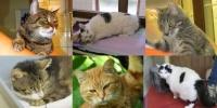 Am 8. August ist Weltkatzentag!