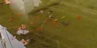 ****Dringend****25 Goldfische suchen neuen Teich!