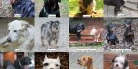 Tag des Hundes 2015