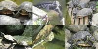 Tagebuch-Sonderausgabe zum Weltschildkrötentag