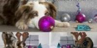 2. Hundeweihnachtsmarkt am 8.12.13