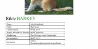 ***Dringend****Helfer bei der Suche nach Barkey nötig!***