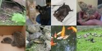 4. Oktober - Welttierschutztag