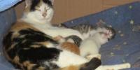 Katzen-Pflegeplätze gesucht