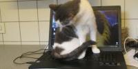 ****Notfall Ella sucht dringend ein Zuhause bei besonderen Tierfreunden****