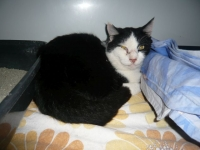 Fundkater aus Bad Aibling
