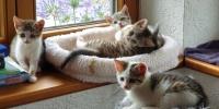 ***Dringend***Pflegeeltern für Katzenkinder gesucht