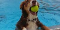 Hundebadetag im Freibad an der Therme Bad Aibling