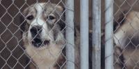 Tierpension vorübergehend geschlossen