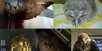 ****Wichtig!****Greifvogelstation braucht Unterstützung!****