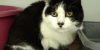 ***Notfall***Seniorin Kitty sucht Zuhause****