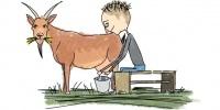 ****Dringend**** Schaf- oder Ziegenbiestmilch gesucht