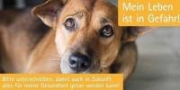 Petition gegen das Verbot von Antibiotika bei der Behandlung von Tieren